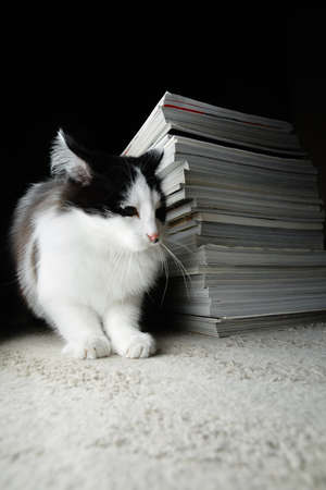 Kitten and a stack of magazines Stock Photo
