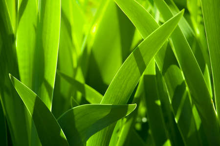 Blur fresh green grass with water droplet in sunshine. Soft focus Archivio Fotografico