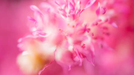 Abstract blur. Beautiful nature scene with blooming tree and sun flare