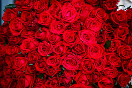 A large bouquet of red roses for a girl, fresh flowers Stockfoto