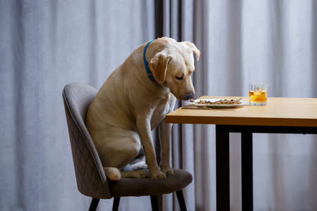 The dog wants food on a plate, but does not have permission from its owner. And since he understands what the word NO means, he does not touch food