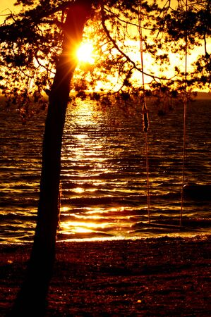 swing hanging on the tree with ropes at sunset sea background with sun rays photo