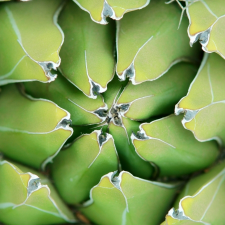 closeup shot of green succulent plant agave photo