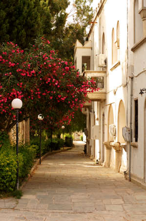 kos: Beautiful small street in old greek Kos town.