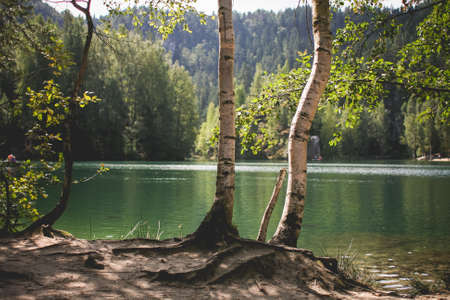 lakefront: Lakeside Nature in Czech Republic