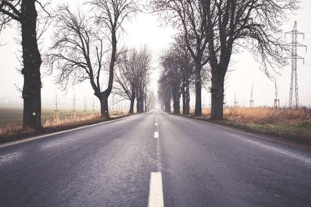 winter road: Foggy Winter Road