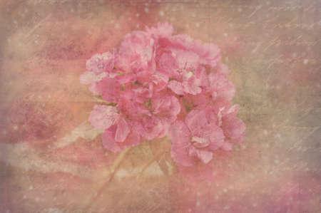 Blossoming geranium over beige background photo