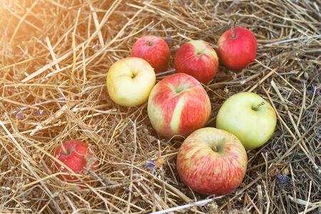 authentic: Authentic organic apples Stock Photo