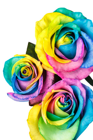 Rainbow roses isolated on a white background Stok Fotoğraf