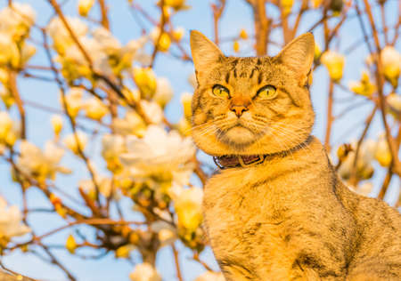 cat domestic outdoors with natural sunlight and defocused flowers background Banco de Imagens