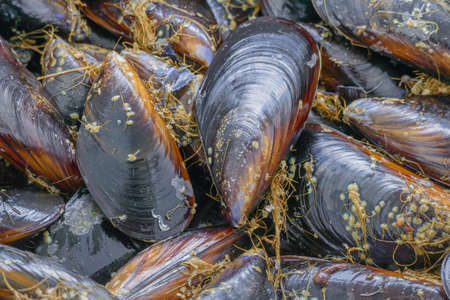 mussels close up with daylight top view 免版税图像