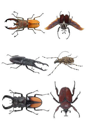 Insects-beetles