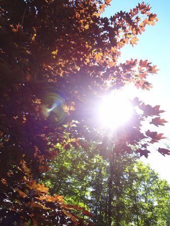 Zon door de bomen Stockfoto - 58032151