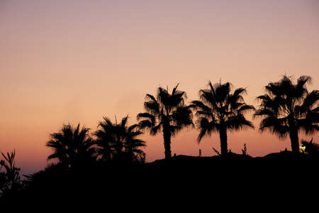 Palms tree in sunset photo