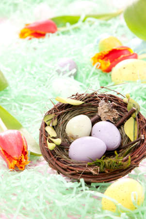Easter Painted Colorful eggs composition in birds nest decorated with spring tulips and grass on a pastel background Stock Photo - 8817916