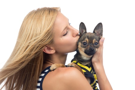 Portrait of young pretty woman kissing small Chihuahua puppy dog isolated on a white background  photo