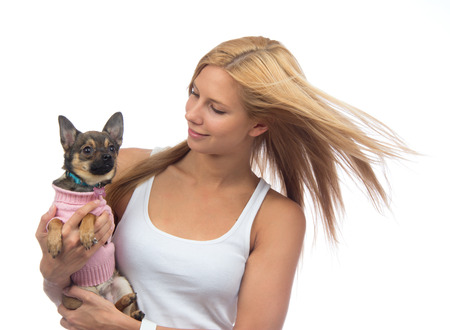 Young pretty woman hold in hands small Chihuahua dog or puppy on a white background photo