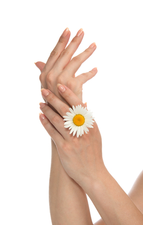 Beautiful woman french manicured hands with fresh camomile daisy flower isolated on a white background