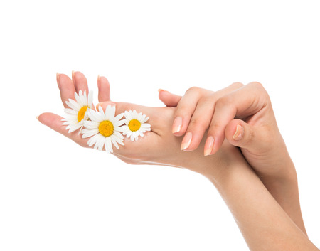 manicured hands: Beautiful woman french manicured hands with fresh camomile daisy flower isolated on a white background