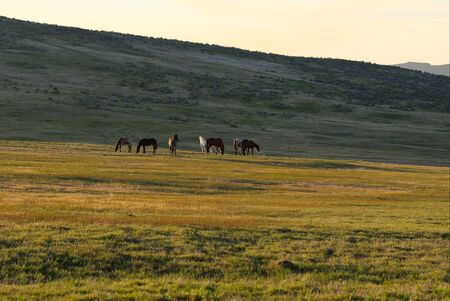 eastern: Wild Horses in Eastern Oregon