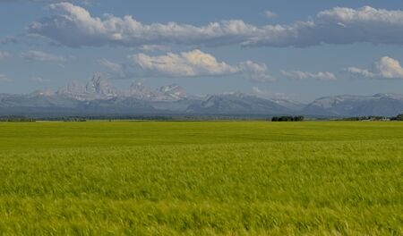 teton: Wheat Fields and Teton Mountains