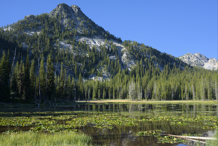 gunsight: Lilypad Lake