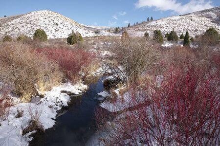 visone: Mink Creek