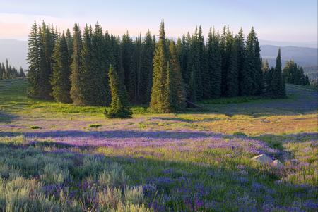 아이다 호 협곡 산에서 야생화의 전체 초원 스톡 콘텐츠