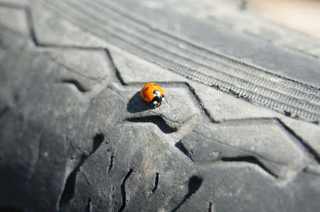 tyre tread: Beetle on the bus Stock Photo