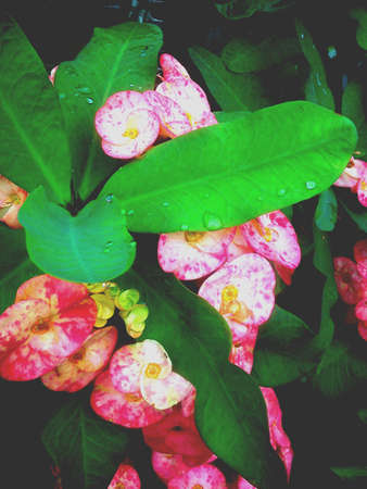 catch up: It was rain before catch up their beauty