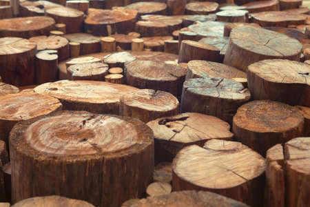 Old teak wood stumps with cracks and annual rings photo