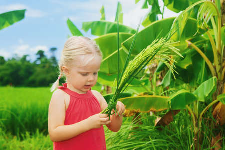 baby rice: Cute curious baby exploring the nature - examining bundle of ripe organic rice on a green field terrace. Healthy food, lifestyle and child preschool education in vacation on tropical island in Asia