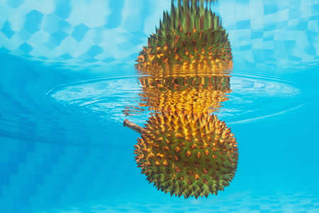 unpleasant: Underwater photography with water surface reflection of tropical spiny fruit durian with an unpleasant smell. Asian background and exotic natural food of Thailand and Indonesia