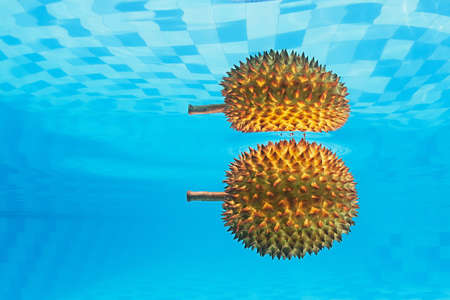 unpleasant smell: Underwater photography with water surface reflection of tropical spiny fruit durian with an unpleasant smell. Asian background and exotic natural food of Thailand and Indonesia