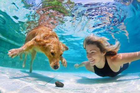 pets: Smiley woman playing with fun and training golden retriever puppy in swimming pool - jump and dive underwater to retrieve stone. Active games with family pets and popular dog breeds like a companion. Stock Photo