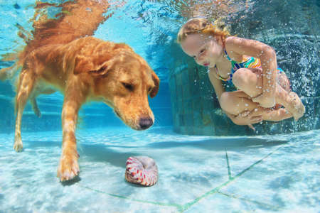 Little child play with fun and train golden labrador retriever puppy in swimming pool - jump and dive underwater to retrieve shell. Active games with family pets and popular dog breeds like companion. Stockfoto