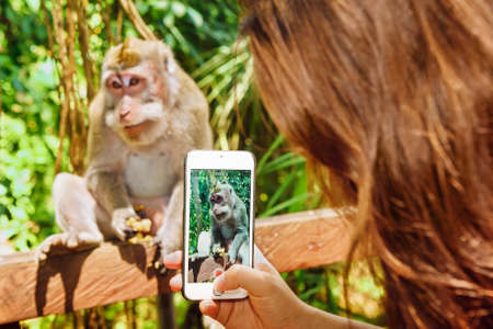taking video: Photograph with narrow focus on woman hand with smartphone taking mobile photo and video of monkey for sharing in social network. Travel lifestyle and people outdoor activity on Bali island vacation.