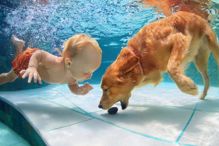 Funny little child play with fun and train golden labrador retriever puppy in swimming pool, jump and dive deep down underwater. Active water games with family pets, popular dog breeds like companion. Stock Photo