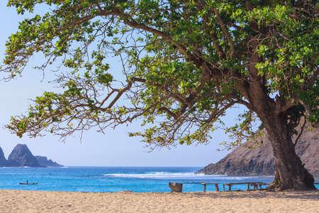 large tree: Tranquil scene on best desert beach with white sand on ocean bay Mawun in tropical island Lombok.