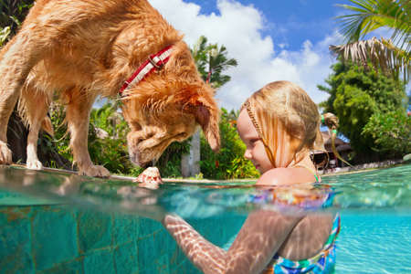 Little child play with fun and train golden labrador retriever puppy in swimming pool - jump and dive underwater to retrieve shell. Kids games with family pets and popular dog breeds like companion. Stock Photo