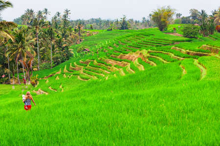 Happy mother with baby son walk with fun in terrace plantation with growing green rice. Beautiful view of traditional fields. Travel adventure with children, family summer vacation in Bali, Indonesia Stock Photo