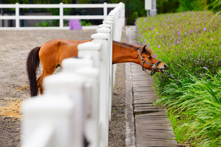 Young brown color horse have fun, reaching through fence for eating flowers from green flowerbed. Domestic animals, funny pets. Summer outdoor background.