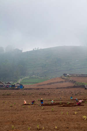 Kota Batu, Malang, Indonesia - July 14, 2018: Indonesian farmers work hard in field. Group of women dig up by hands garden on background of terrace plantations at hillside with growing vegetable rows.