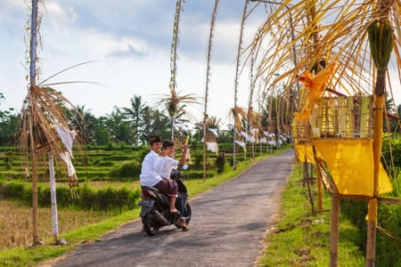 Bali, Indonesia - May 30, 2018: Two young men in traditional costumes ride on motorcycle to village temple for religious festival. The road among rice plantation is decorated with penjor bamboo poles