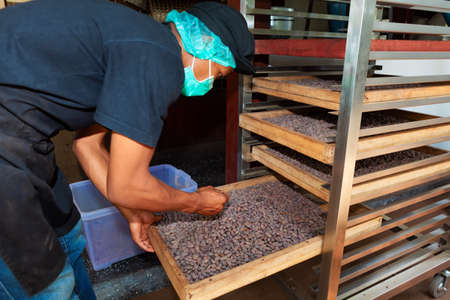 Bali island, Indonesia - October 03, 2015: Young man working at chocolate factory,  checking process of cocoa beans roasting