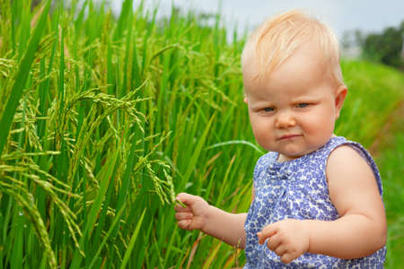 Little baby walking on green field terrace near Ubud, exploring the nature - examining rice grains crop on plantation. Healthy food, travel family lifestyle, summer vacation with kids on Bali island