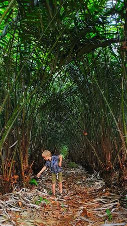 Il piccolo bambino esplora la frutta esotica del serpente con la pelle squamosa che cresce sulla palma salak con rami spinosi nella piantagione tropicale dell'isola di Bali. Sweet Snakefruit è popolare in Indonesia, Thailandia, Asia meridionale
