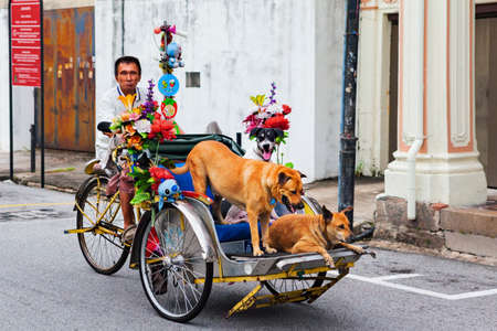 Georgetown, Penang, Malaysia - September 01, 2014: At street of George town old rickshaw driver man ride on vintage trishaw, carry funny passengers and his friends - mongrel dogs.