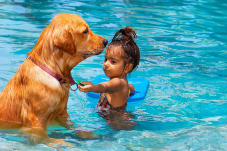 Little child play with fun, train golden labrador retriever puppy in swimming pool. Kids games with family pets. Popular dog breeds like companion.