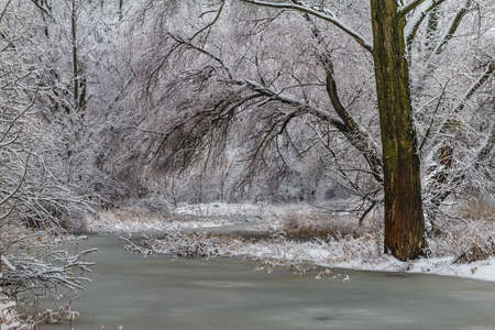 Frozen path to the untouched winter forest in Natural reserve Apali in South Slovakia.